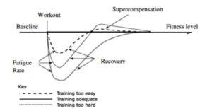 Trainingsprincipes Supercompensatie Sander