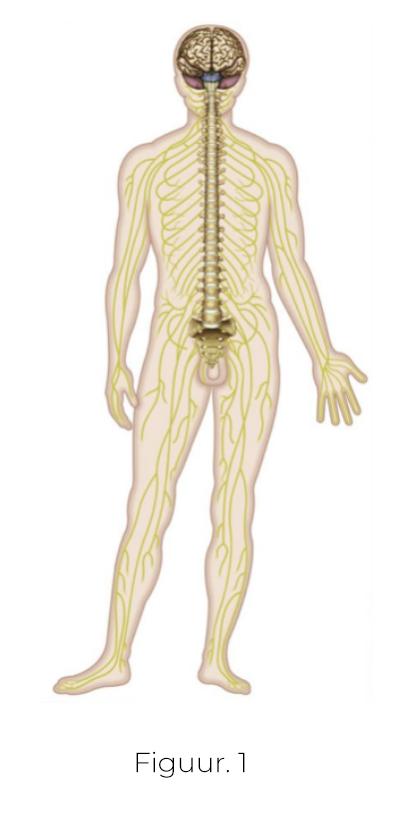 Aanhoudende pijn fysio-actief